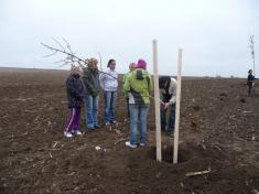 2011 Výsadba stromořadí